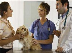 How to find the right vet for your pet