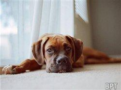 Housetraining your puppy: Tips for keeping your dog behaved and your home clean