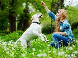 Dogged by pricey pet care? Cost-cutting tips for pet owners