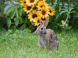 Garden detective: Clues to determine and deter unwanted animals in your yard and garden