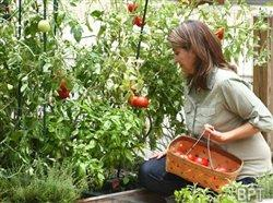 Sure-grow guidance for first-time gardeners