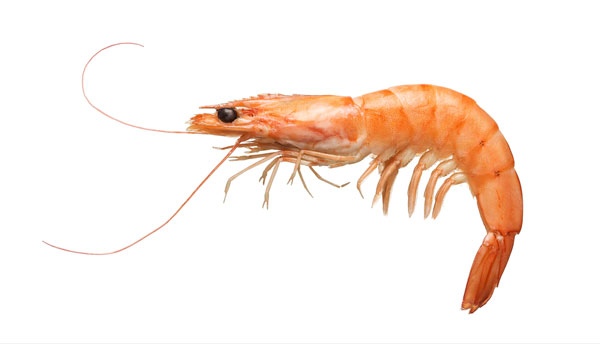 Some research suggests that there is not enough shrimp allergen in